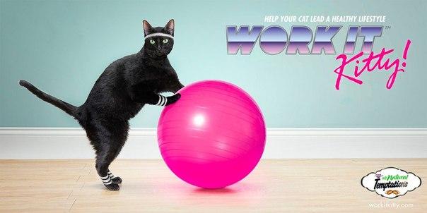 как заниматься кошачьим фитнесом Саливанчук биография актрисы